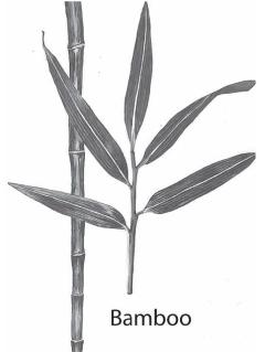 evo bamboo